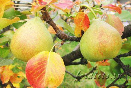 Осенняя диета для похудения — правильное питание осенью
