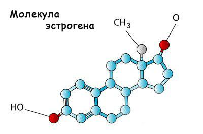 hormon-estrogen