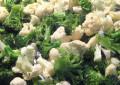 Что приготовить из замороженной цветной капусты