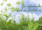 Промокоды IHerb (Айхерб) и другие скидки в июне